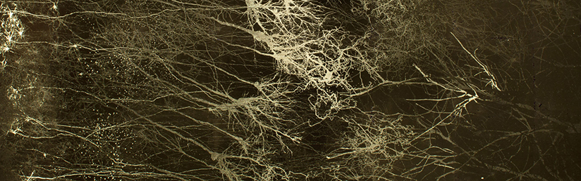 Chaotic Connectome - 22K gilded microetching, by Greg Dunn and Brian Edwards